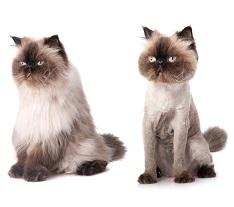 Стрижка котов в уфе на дому